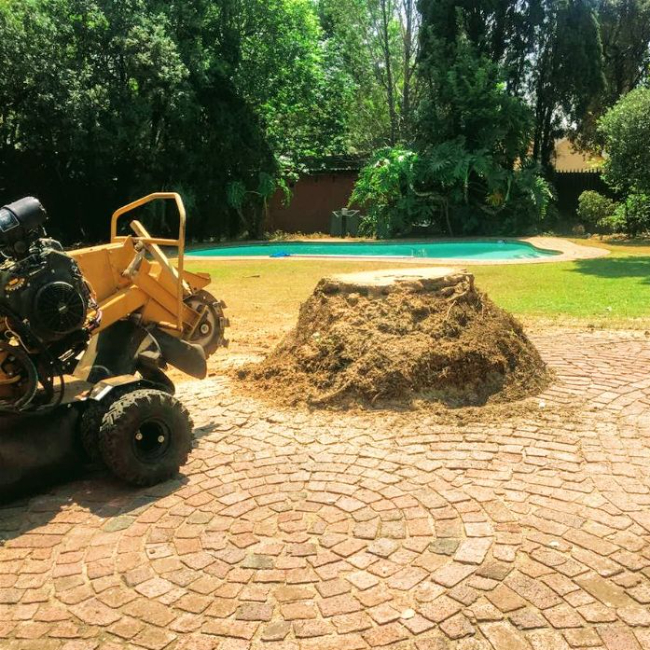 Stump removal in Bryanston