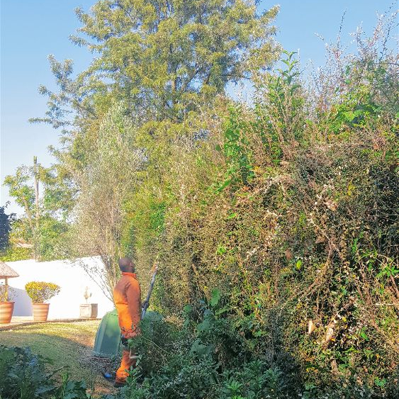 Tree felling and Hedge Trimming in your garden