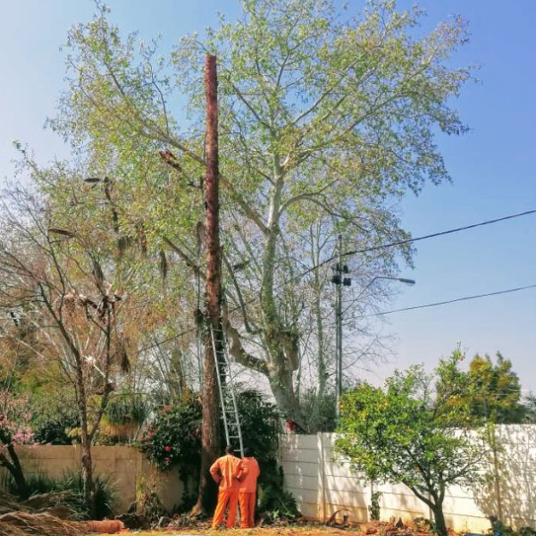Tree felling advice with the owner onsite