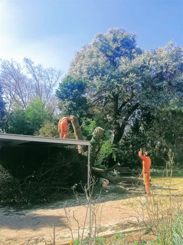 When trees are growing directly next to your house, you have even more hurdles to avoid. The last thing that you need is causing your tree to crash through your roof! Save time by calling a porofessional tree trimmer to help.