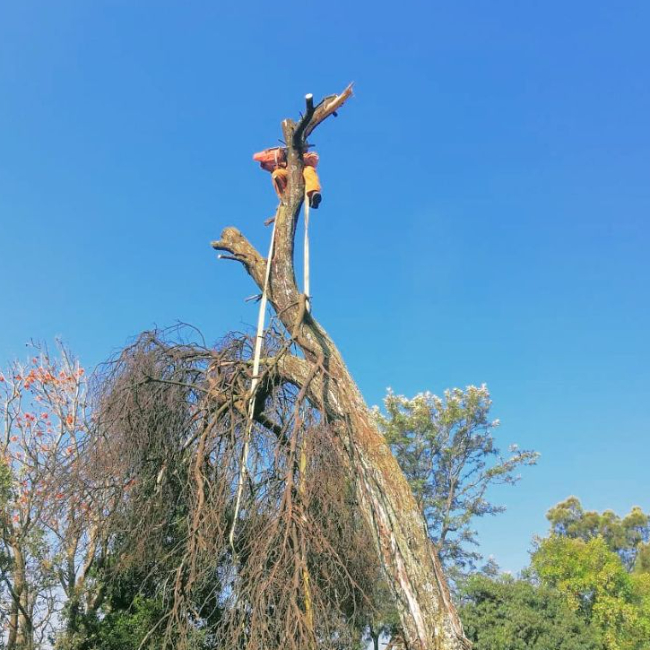 Tree felling and tree removal in randburg