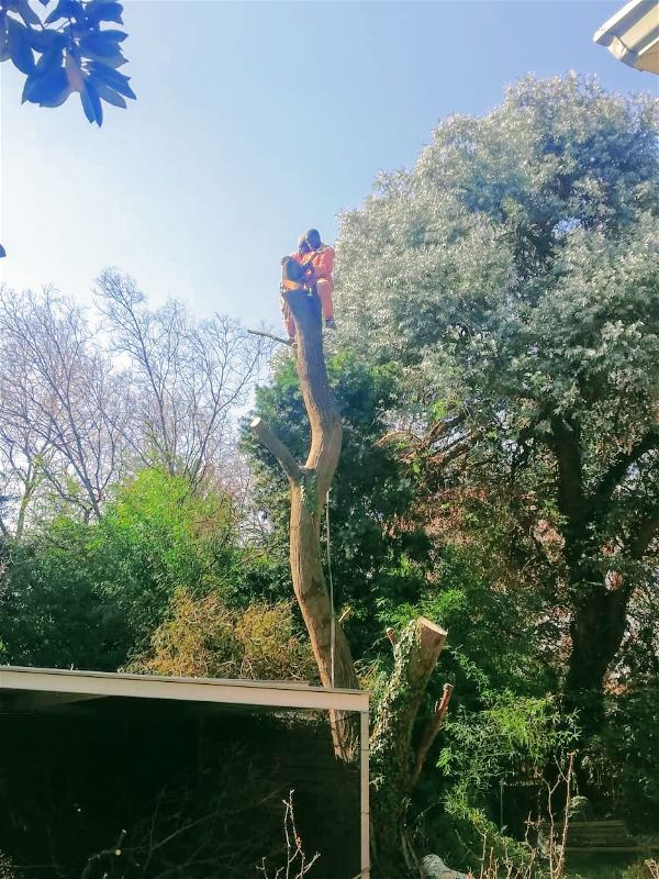 You need an experienced team of tree felling and removal professionals who complete your job the safest way possible. When you choose us, we offer the best in dedicated tree removal service and care options!