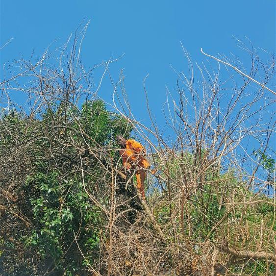 Tree felling can be dangerous