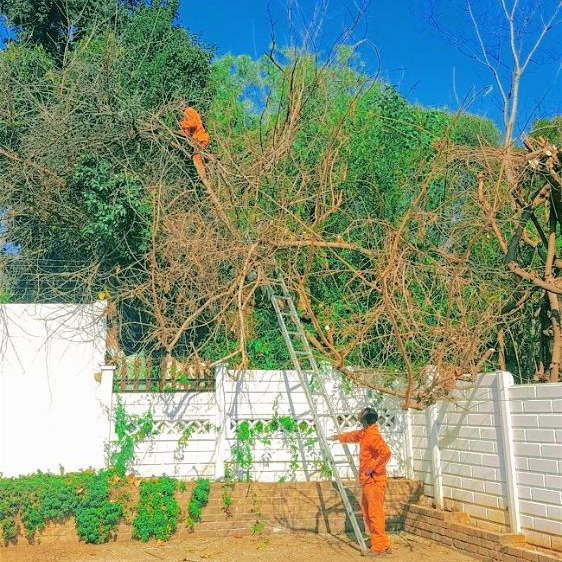 Tree felling close to boundries and cables can be dangerous