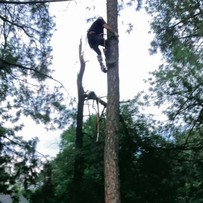Tree felling in dangerous conditions - fully insured