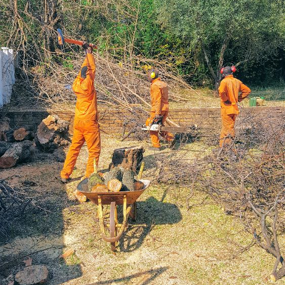 Tree felling sorting tree trunks axe precision