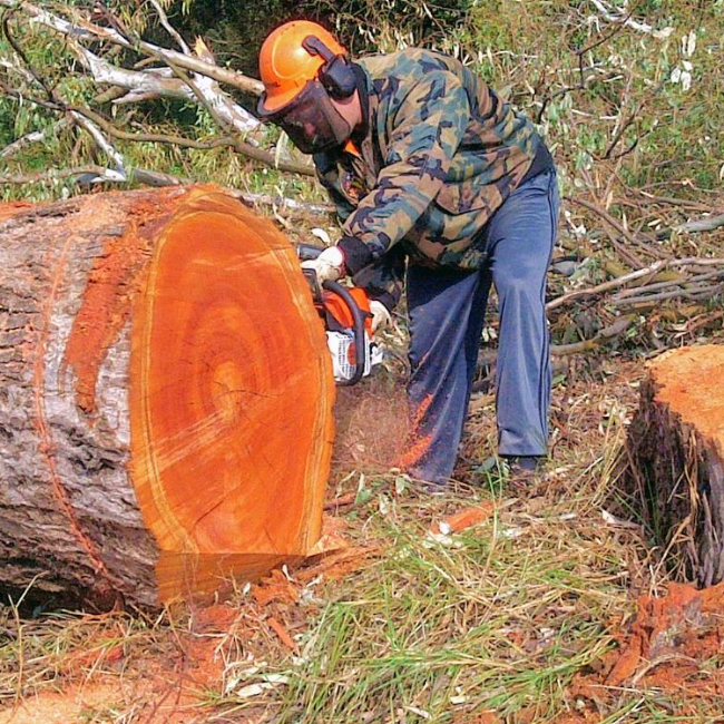 Tree felling tree feller with experince - Bryanston