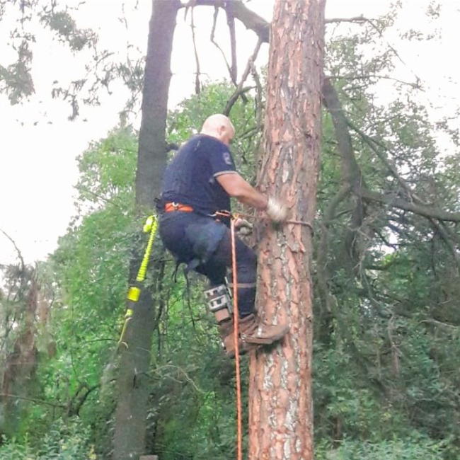 Tree felling with professional gear - Lone Hill